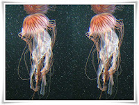 Jellyfish Animal Pictures