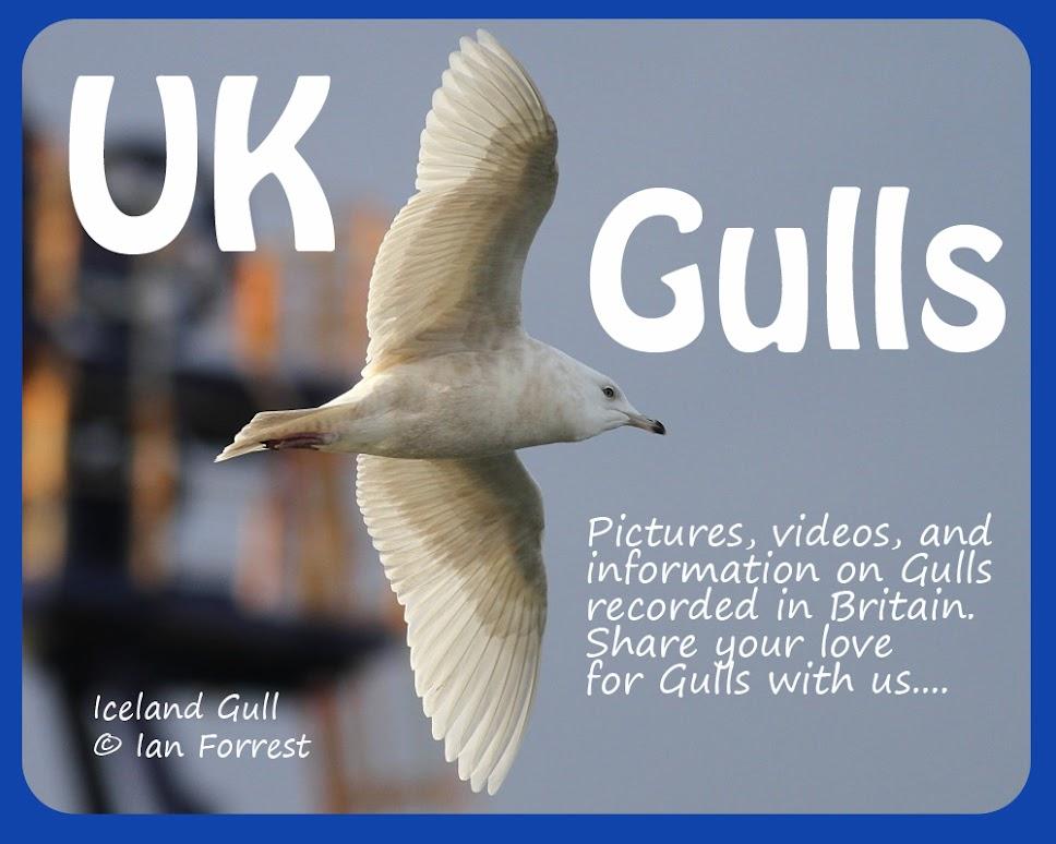 UK Gulls