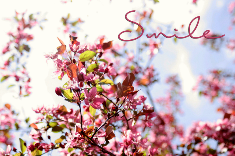 SPRING WALLPAPERS FOR YOUR LAPTOP FREE DOWNLOAD