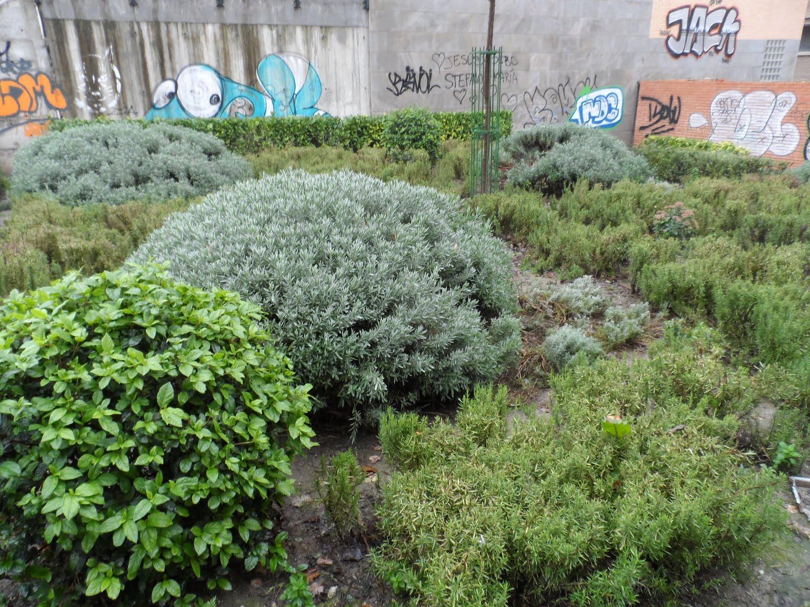 Jardines ciencia y arte peque o jard n de plantas medicinales - Jardin de aromaticas ...