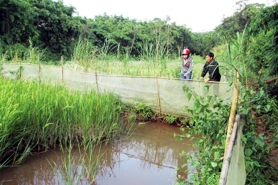 Gia Lai: Triển vọng từ Dự án nông thôn miền núi