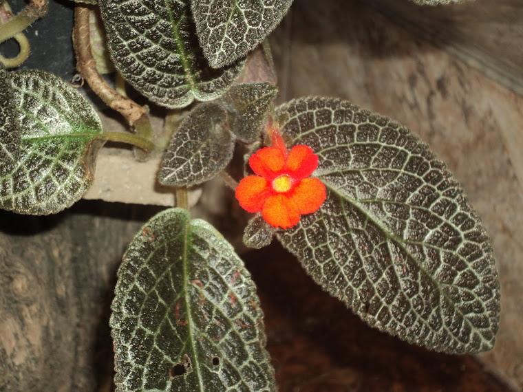 Acho esta flor linda, mas não sei o nome...