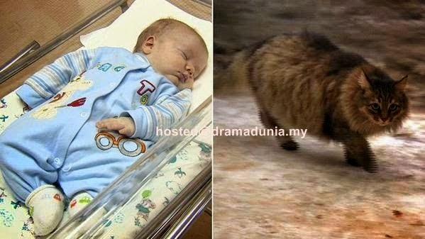 Inilah Kucing Yang Memanaskan Badan Bayi Yang Dibuang Dalam Kotak Dari Mati Kesejukan
