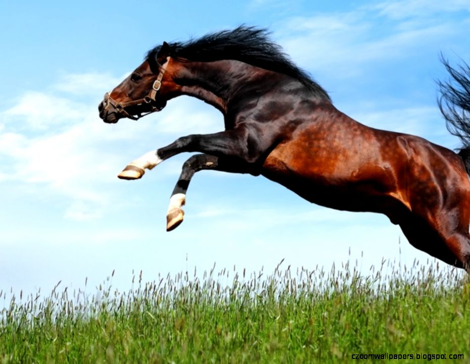 Arabian Horse HD Wallpapers  Hd Wallpapers