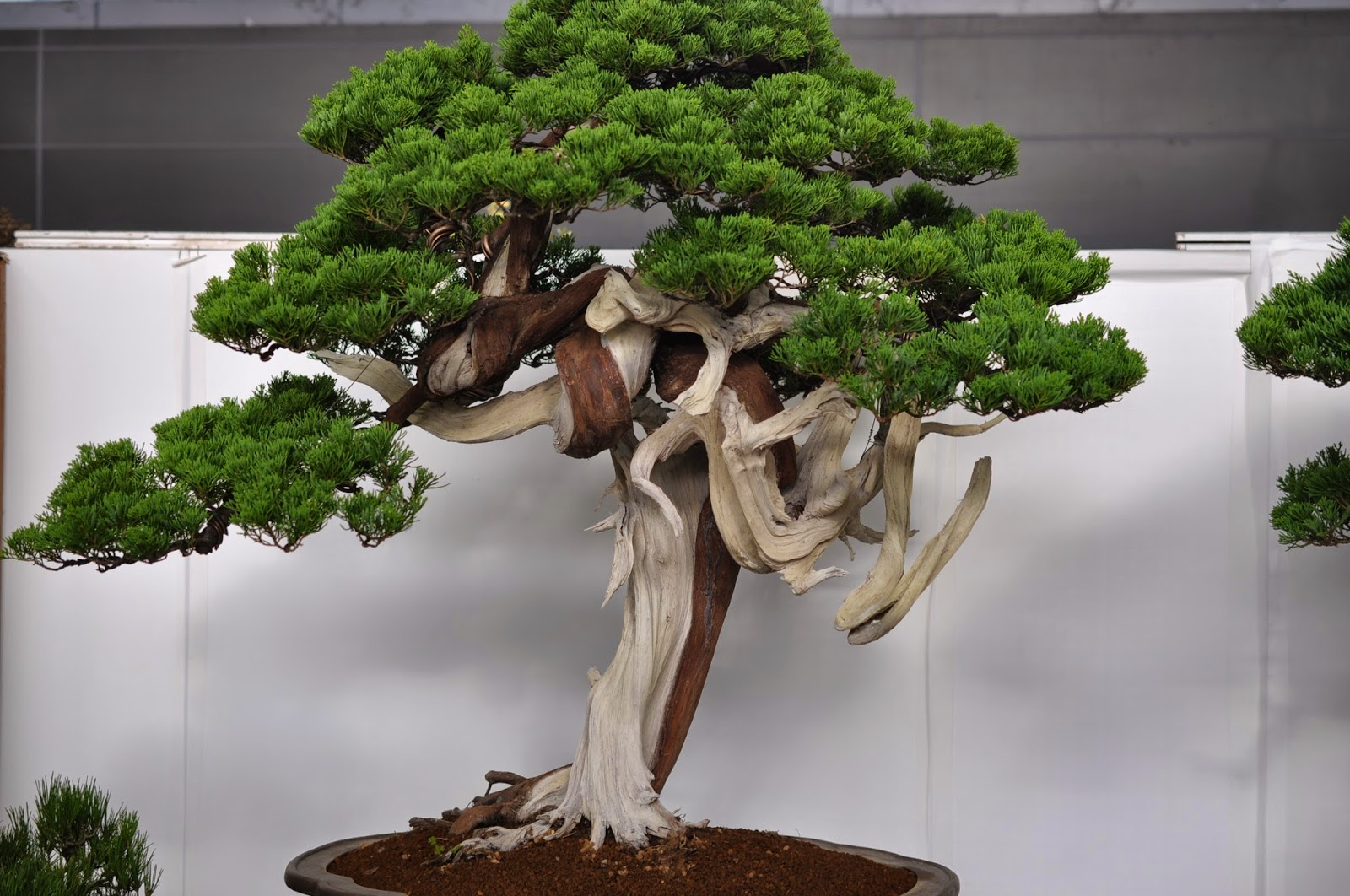 All In One Bonsai And Ceramics Taiwan Bonsai Exhibition