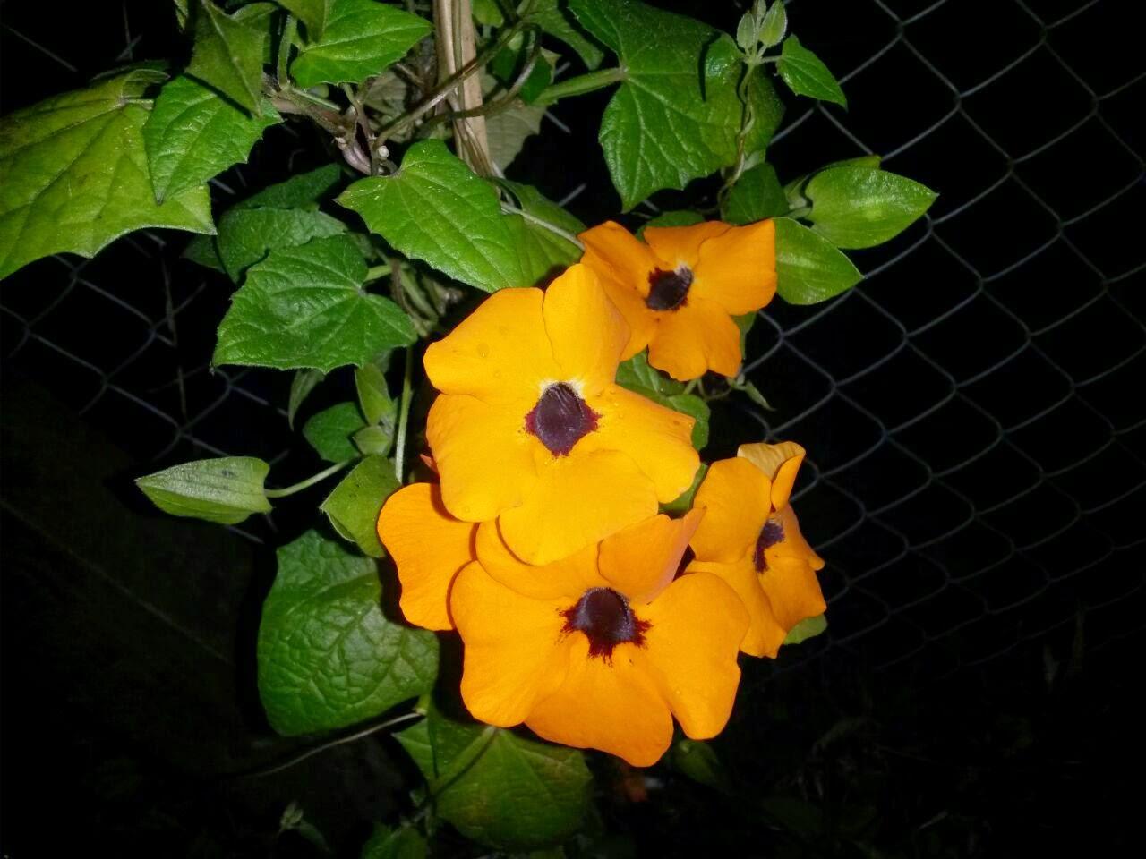 Que flor es esta?