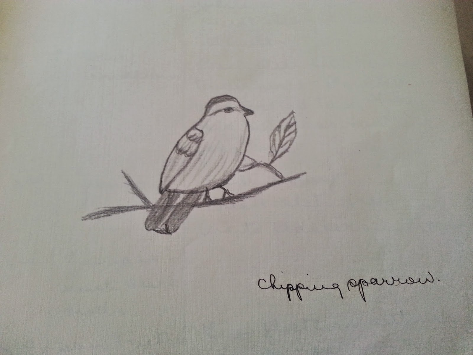 book analysis song of a hummingbird Sophia rocha mike fraga chi 100 november 16, 2012 book review the novel, song of the hummingbird by graciela limon, is a book about huitzitzilin's encounters during the spanish conquest and the coming of cortes.