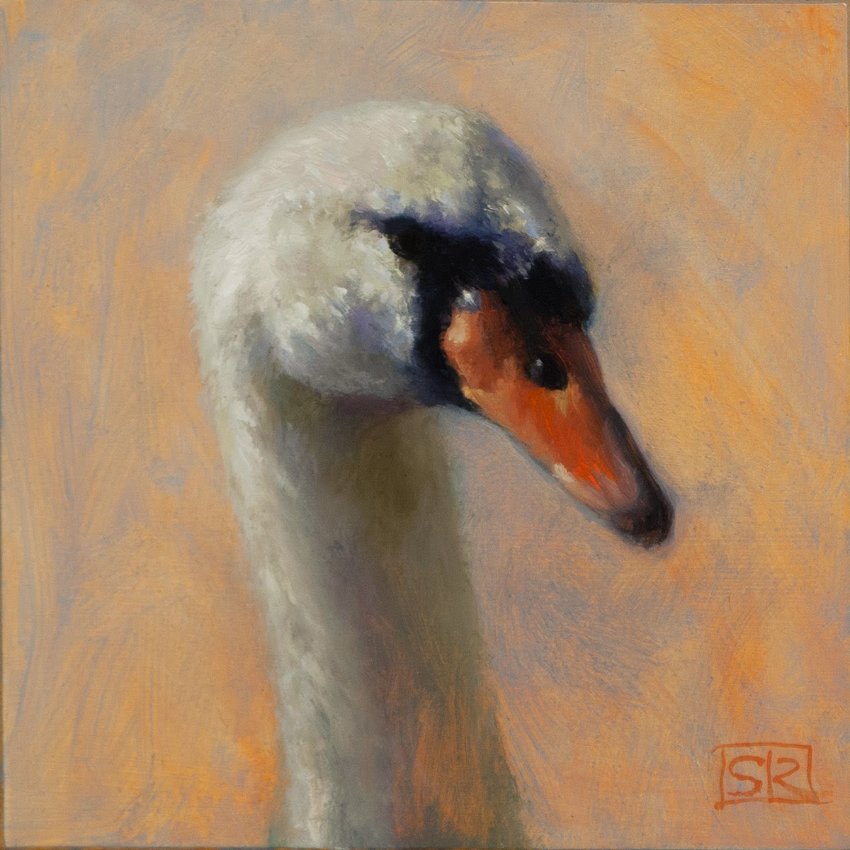 Swan portrait, oil paint, ornoithological art, Shannon Reynolds