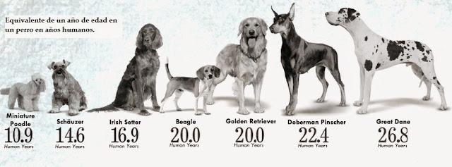 calcular la edad de los perros