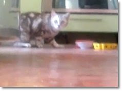 video de gatos