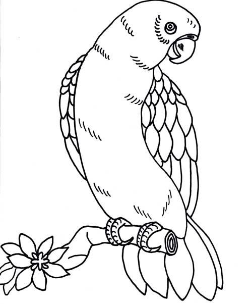 bird coloring pages rspb birdwatch - photo#11