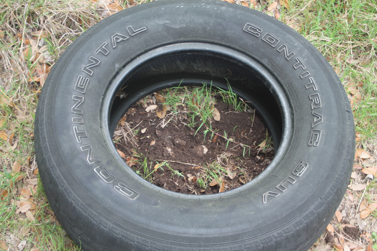 Making shift growing potatoes in old car tires - What to do with used tires ...