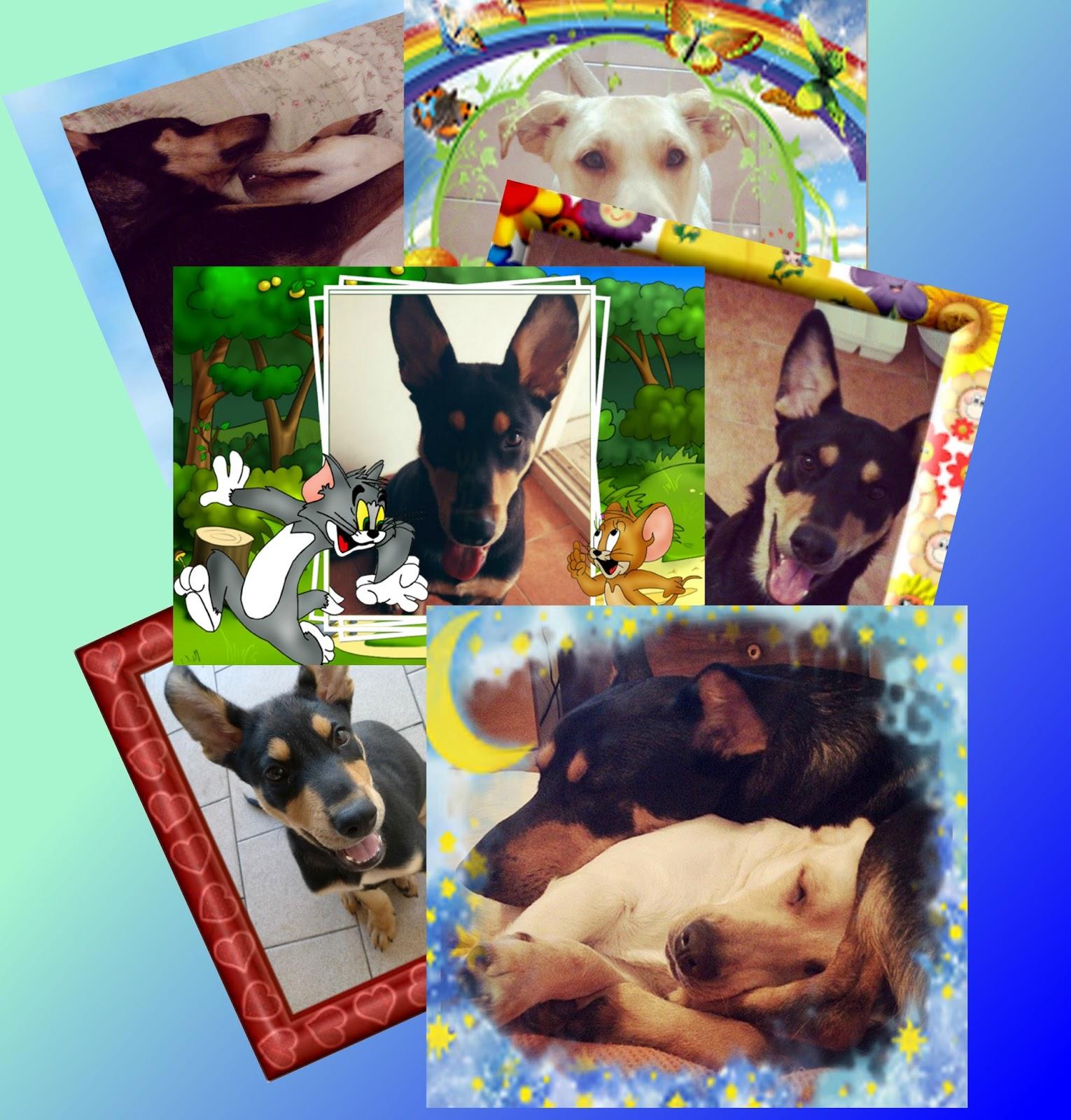 Excelente Los Marcos Del Collage Mascotas Ilustración - Ideas ...