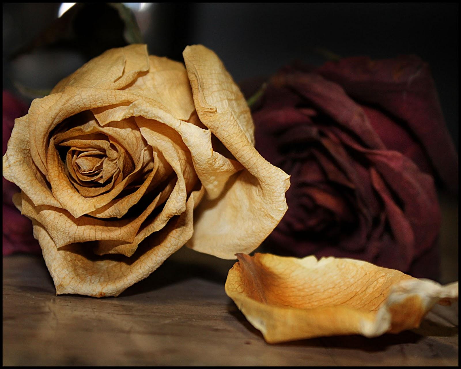 Michaela Shipman Digital Artist And Photographer Dead Roses