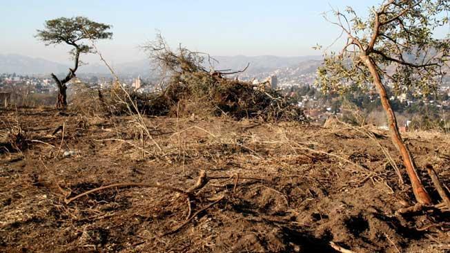 Deforestaci n en la provincia de c rdoba for Lavoz del interior cordoba