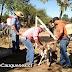 Municipalidad de Cauquenes ejecuta plan de sanidad animal para control de plagas