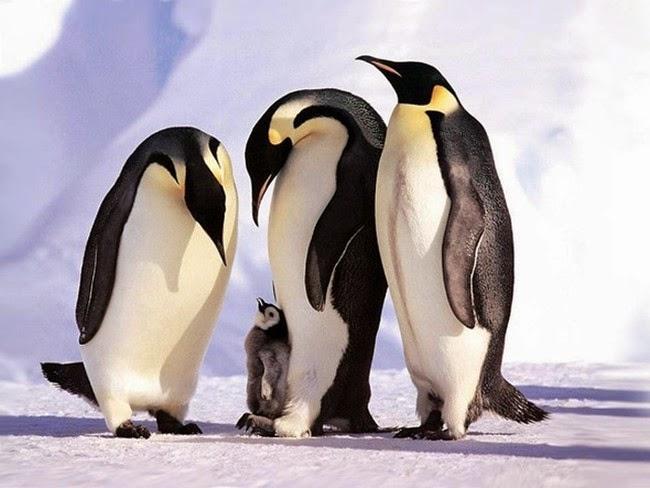 الحيوانات desktop-1425574602.jpg