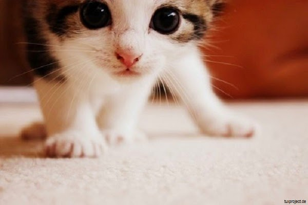 belle Photo de chaton gratuit