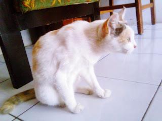 Idung Mungil Cantik Si Kucing Kampung