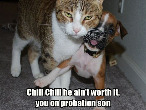 funny cat - Chill Son - Chill!