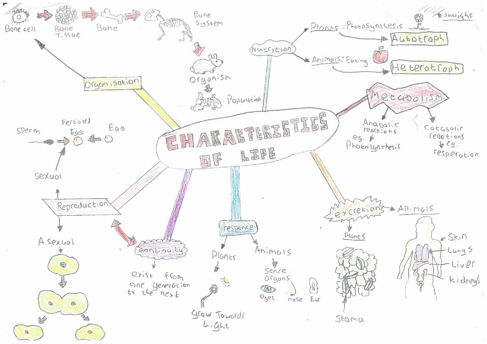 Magh sci leaving cert biology charachteristics of life dara sweeney ccuart Image collections