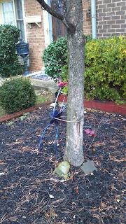 metal stork attached to a tree with a lock in a front yard