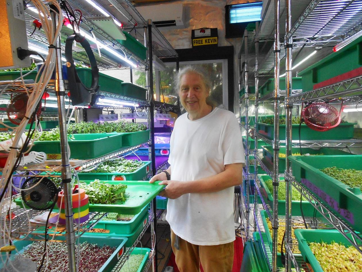 Dining Dish Non GMO Micro Greens Urban Farming With City