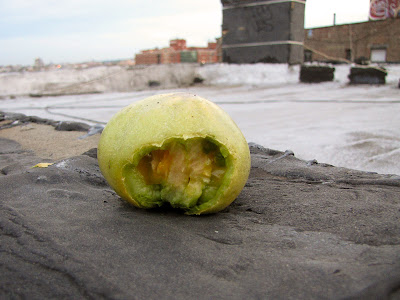 Bucolic Bushwick Rooftop Pest