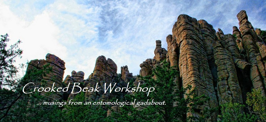 Crooked Beak Workshop