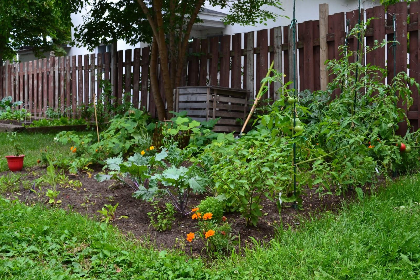 que peut on planter en juillet juillet au jardin en. Black Bedroom Furniture Sets. Home Design Ideas