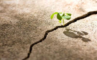 Κάθε μέρα χάνονται 200 στρέμματα αρδεύσιμης γης