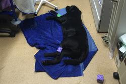 Догхантеры отравили собаку