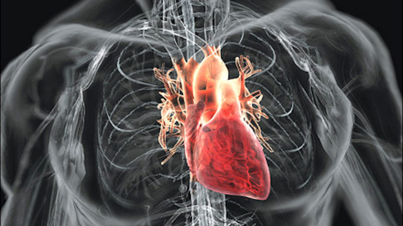 Human heart 3d scan view new xp wallpapers windows7windows8 xp7 pc human heart 3d scan view new xp wallpapers windows7windows8 xp7 pc them mobile themes pc background walls mobile background walls free download ccuart