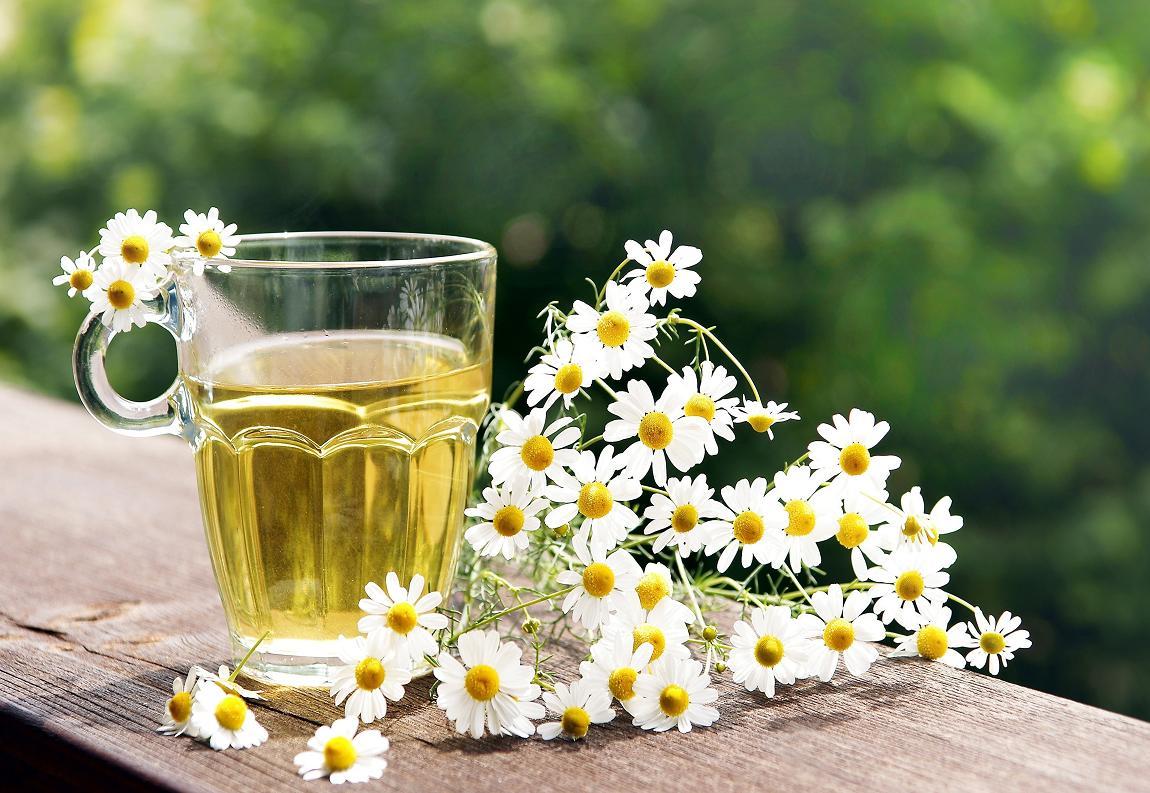 Ромашка аптечная (лекарственная трава) - полезные свойства 73
