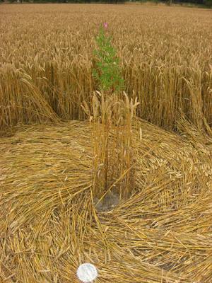 Los Circulos y dibujos en los campos nos dan un mensaje Extraterrestre 20120620+2012+crop+circle+4
