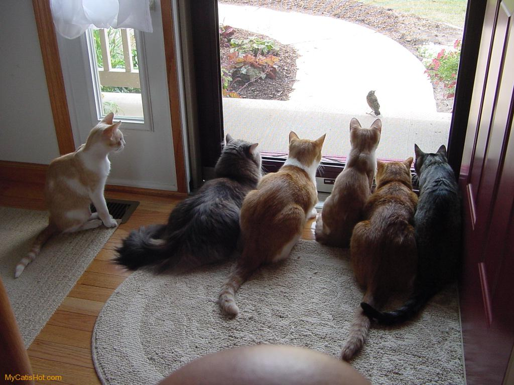 Special Cat Pictures Funny
