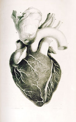 jantung manusia,cases of organic deases, lung, arteri pulmonari, ventrikel, lung, my heart, love,jantung berlubang, jantung pisang, hati manusia, injap kiri, injap kanan, tiub fallopio,jantung bengkak, anatomi jantung manusia