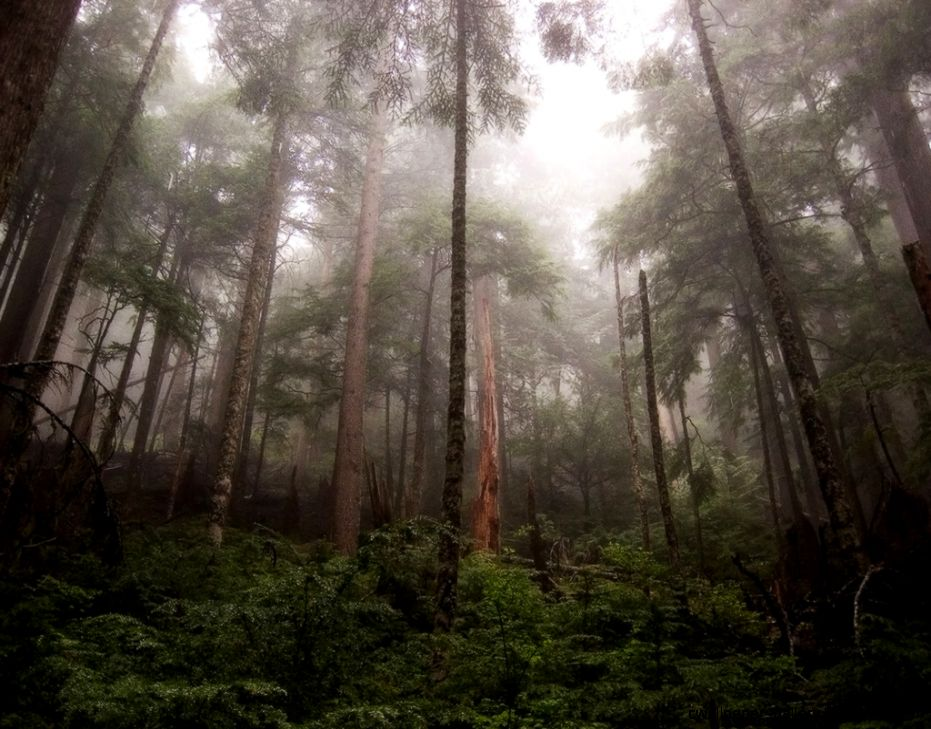 How You Can Help Save The Rainforest And Slow Global Warming  Fun