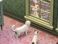 catstory2-3.jpg