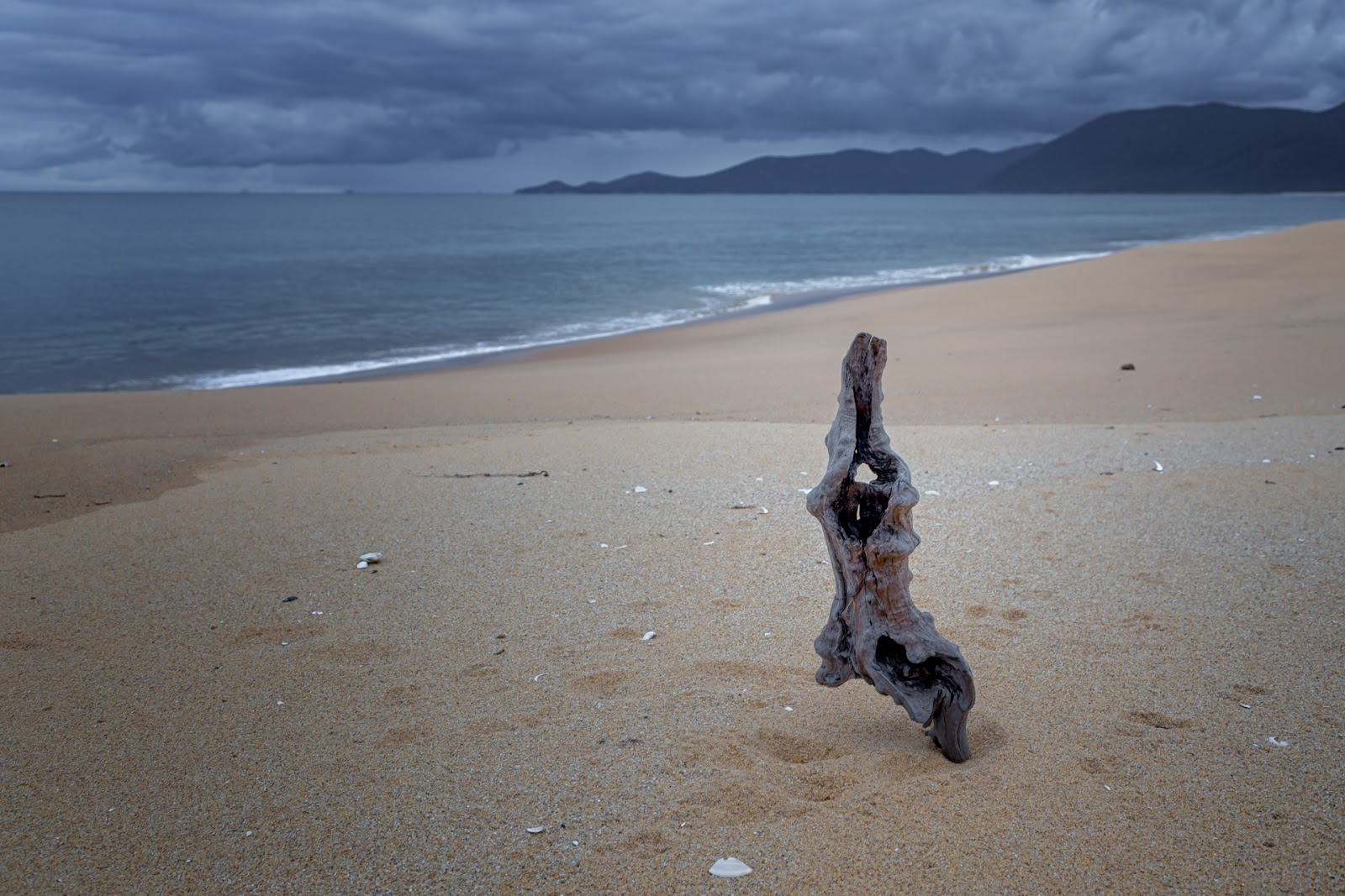 buried timber on five mile beach wilsons promontory