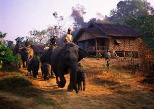 Elephant Trek at Alaungdaw Kathapa National Park