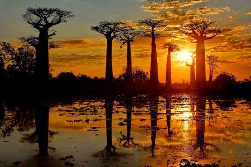 Voyage Madagascar - Allées des Baobabs