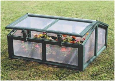plantas e jardins plantas flores e jardinagem estufa. Black Bedroom Furniture Sets. Home Design Ideas