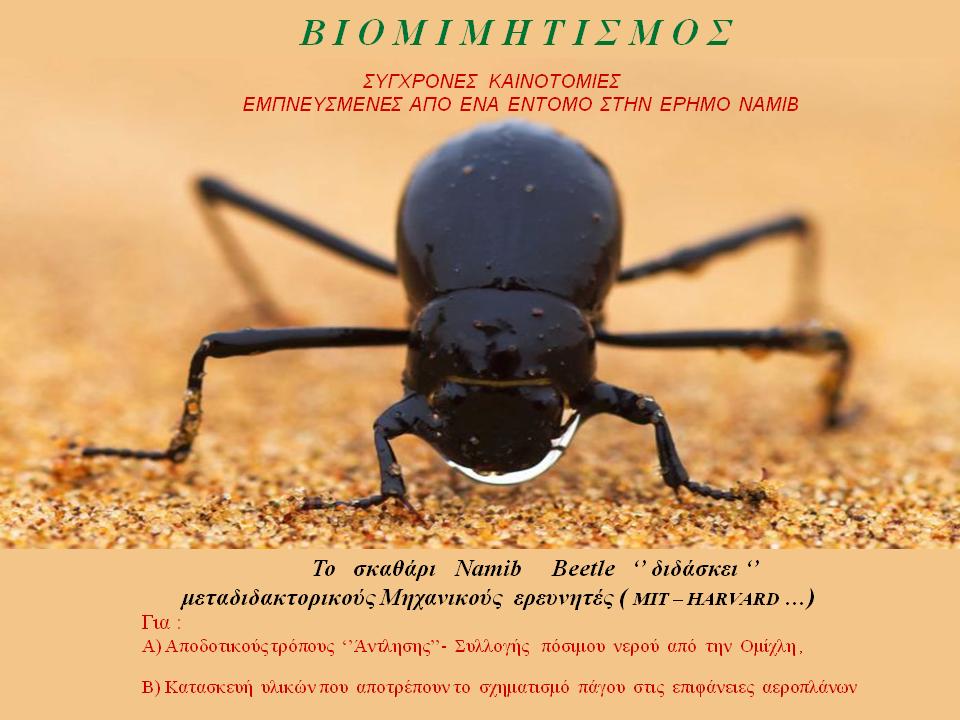 Βιομιμητισμός: Σύγχρονες Καινοτομίες Εμπνευσμένες από Ένα Έντομο της Ερήμου - Άγγελος Αντωνέλλης