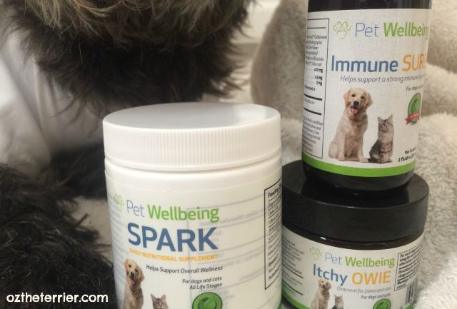 Oz the Terrier with Pet Wellbeing holistic pet supplements including Immune SURE