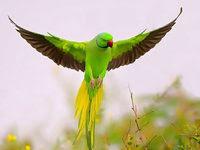Kisah Burung Beo dan Sakaratul Maut