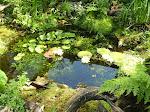 Onze tuin is een tuinreservaat