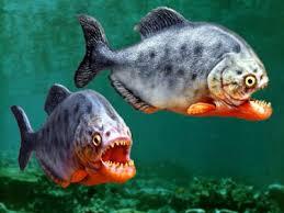 Piranha-Movies