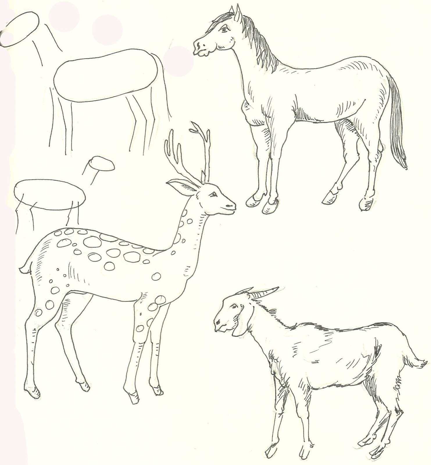 Animal step by step easy outline drawing horse deer goat