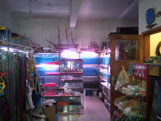 2012 03 17+12.15.03 - İlhan Akvaryum - Çanakkale'nin Akvaryumcuları